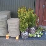 Trampsten och växter