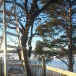 Trädvård en vacker vinterdag