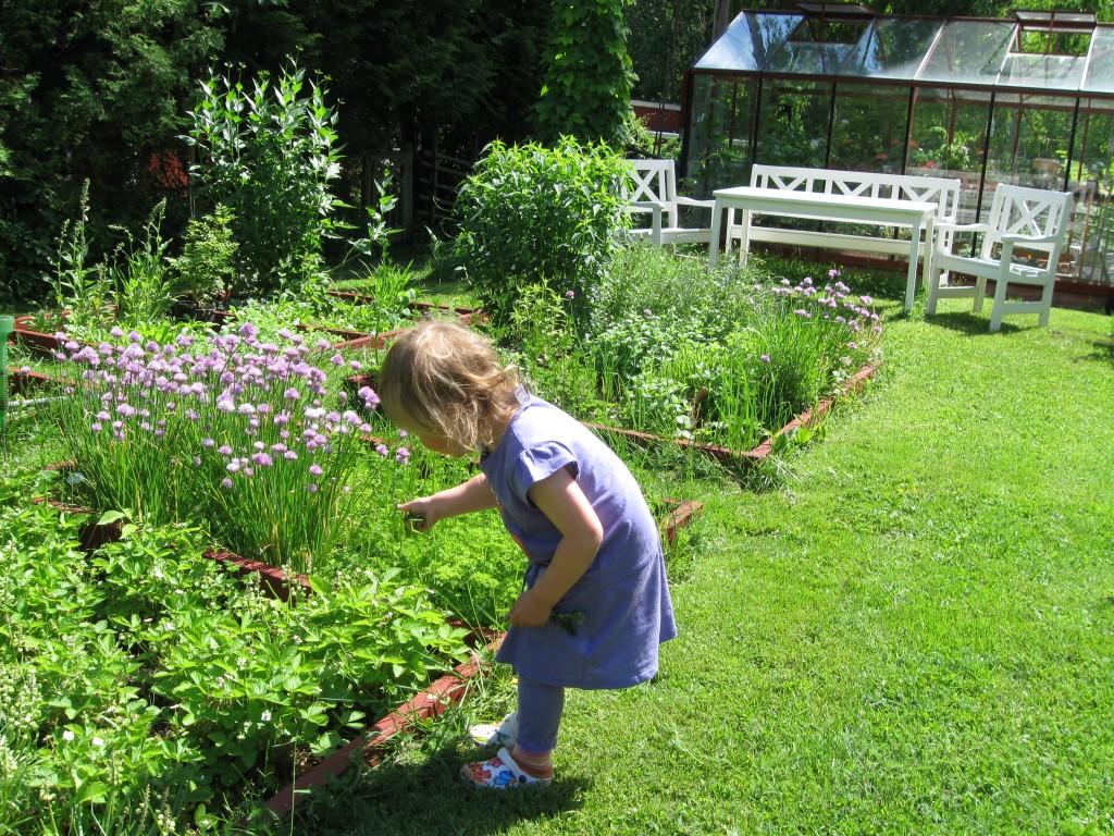 Sommarglädje i trädgården