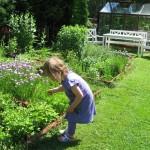 Trädgården i sommarskrud