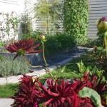 Från idé till köksträdgård