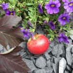 Stenrabatt längs husvägg med Grythytteskiffer från Hasselfors Garden