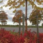 Vilka höstfärger vi haft! Här bild från Lanna och Carl Jan Granquists väg
