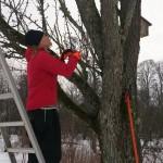 Stina tar ympris för att skapa nya träd