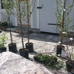 Växtplantering