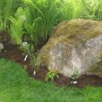 Stenplantering