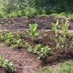 Lundplantering. När växterna själva får välja!