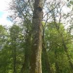 Talande träd och åsknedslag