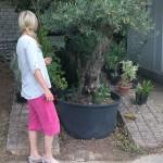Stina vid olivträd i plantskola Kroatien