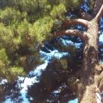 Stinas favoritträd i Kroatien