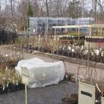Östansjö trädgård
