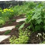 Plantering av woodland står klart