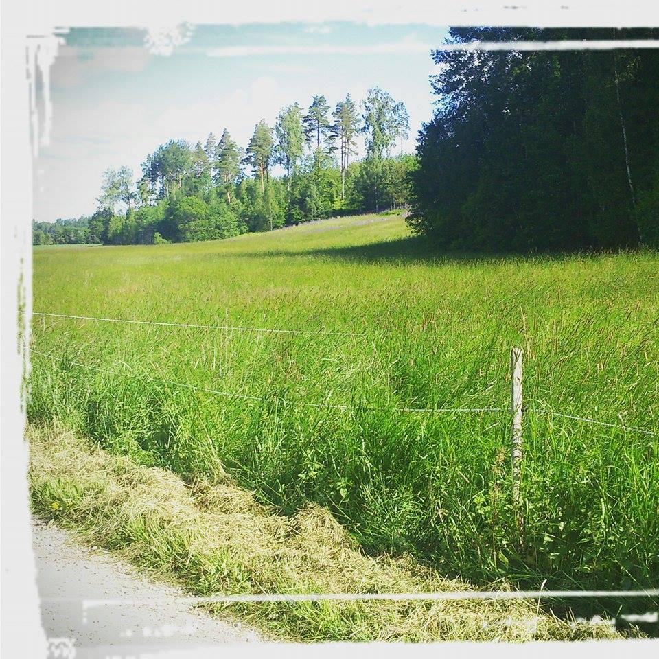Trädgårdsplanering Ekersby