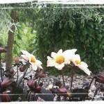 Trädgårdsfix i Lanna!