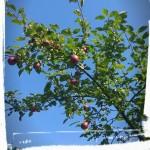 Trädvård i vacker septemberdag