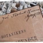 Farfarsfars gamla botanikbok