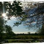 Trädvård Attersta