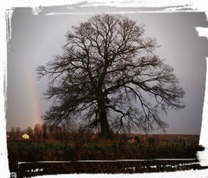 Vackert träd Berga, Fjugesta