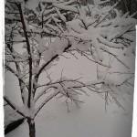 Tung snö kan knäcka grenarna