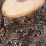 Trädvård på schemat