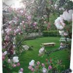 Äppelblom i vår trädgård!