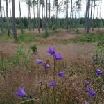 Skogspromenad med inspiration
