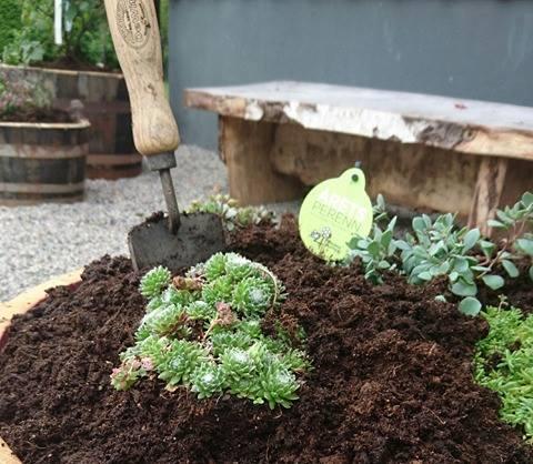 Gamla whiskey-tunnor och vinfat blir fina planteringar