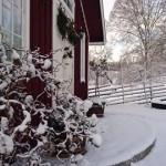 Ormhassel i vinterskrud!