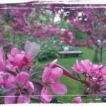 Vår trädgård