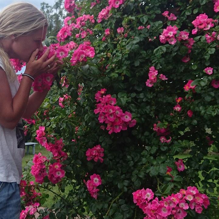 Stina bland rosor