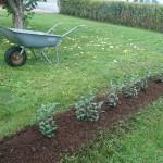 Planteringsuppdrag