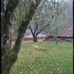 Trädbesiktningar